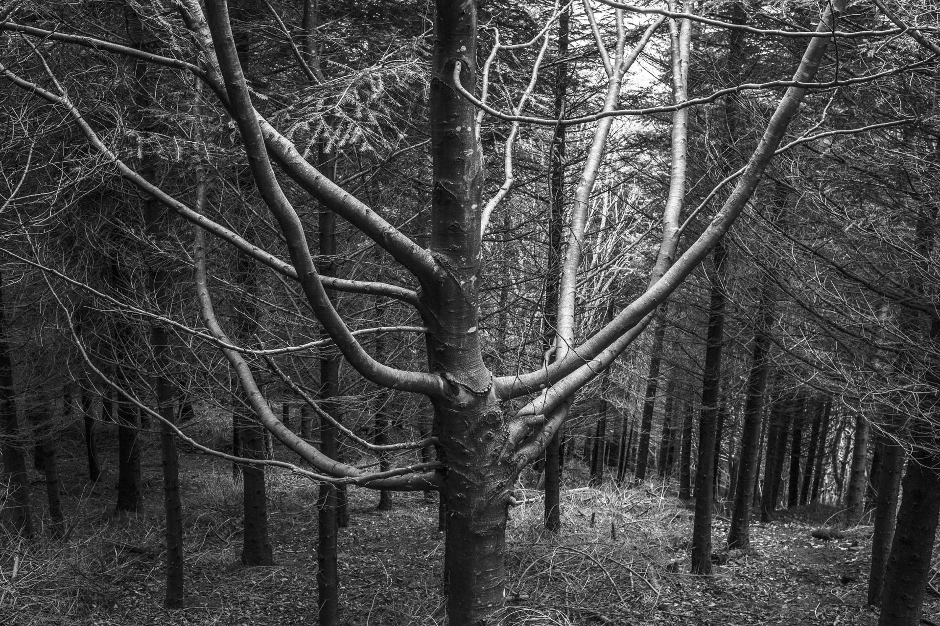 studio-fotografico-parma-alberi