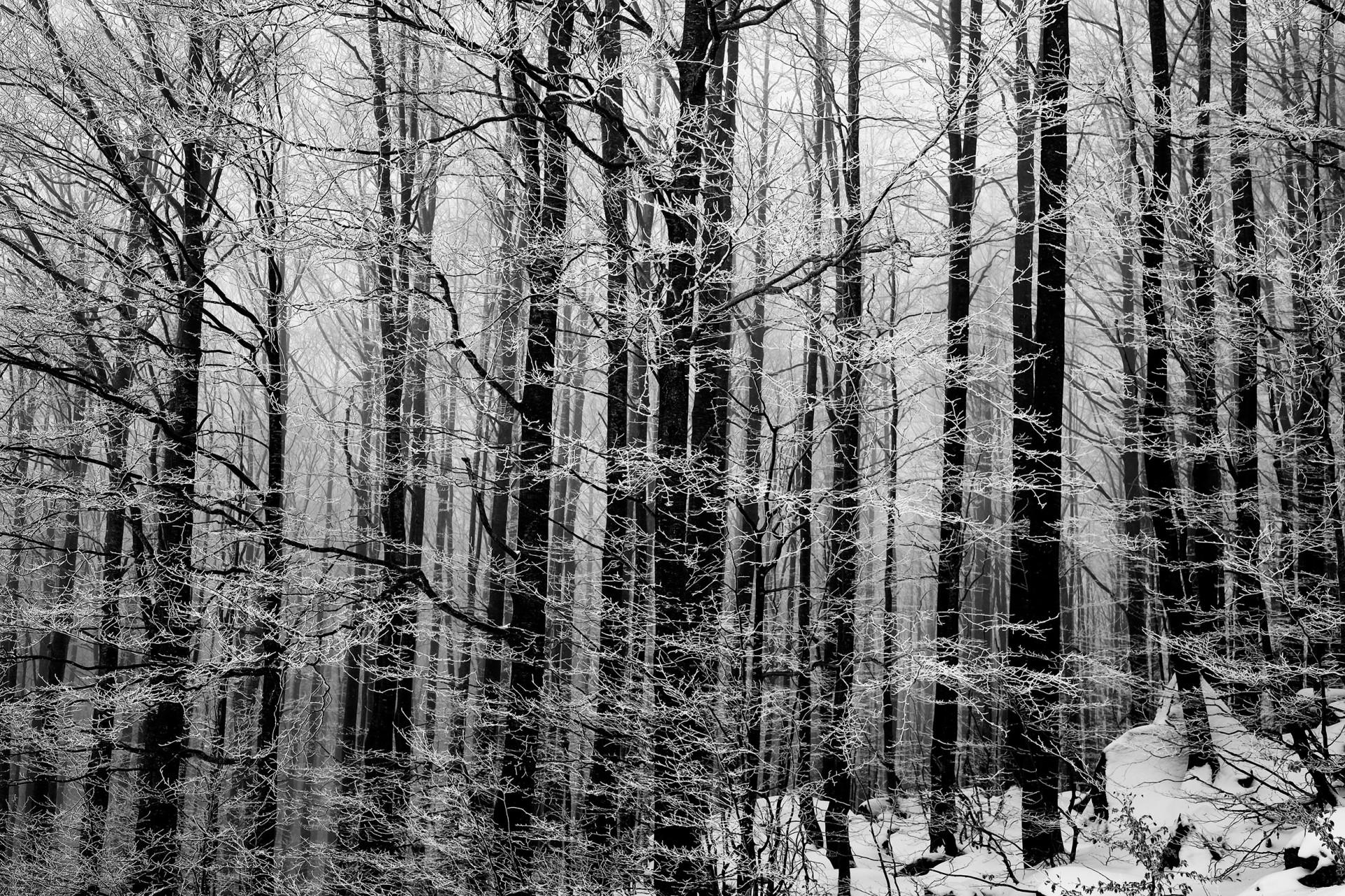 studio-fotografico-parma-alberi-ghiaccio