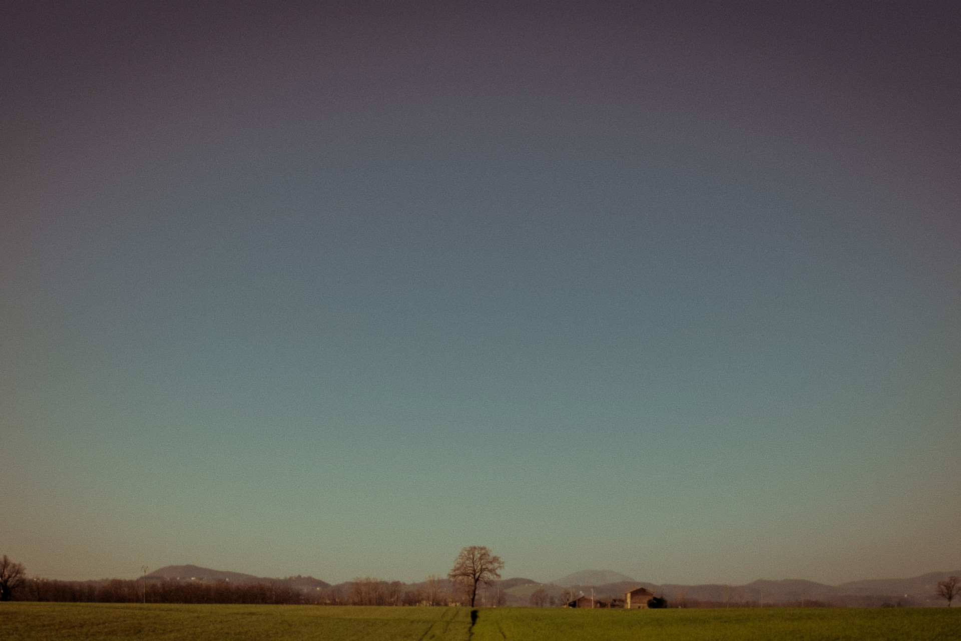 studio-fotografico-parma-albero-solitario